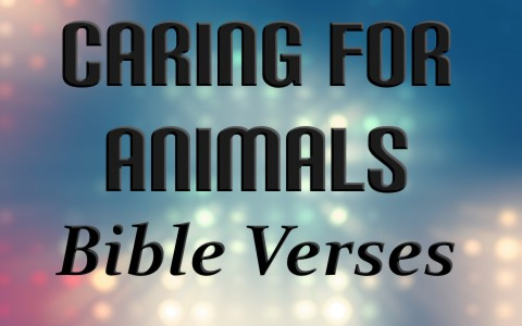 8-awesome-bible-verses-about-loving-and-caring-for-animals